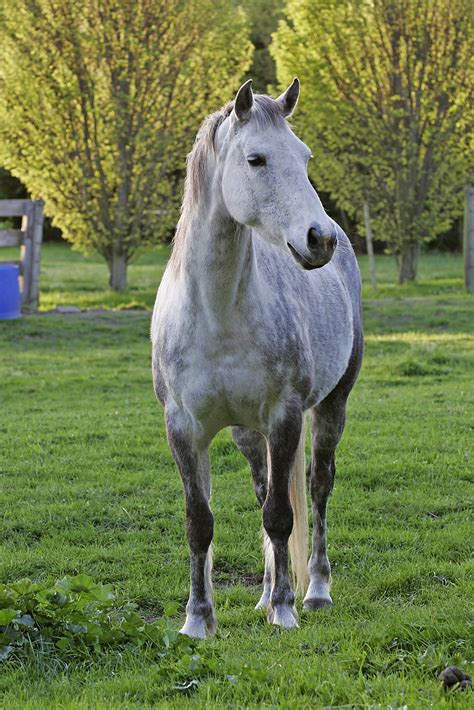 horse field horses wallpapers hd thoroughbred file grey running gray dapple losing lunch animals there animal owner light