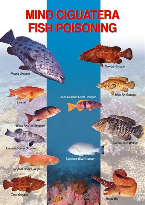 fish poisoning ciguatera symptoms toxins carry reef risk amberjack poison doing course know water any species