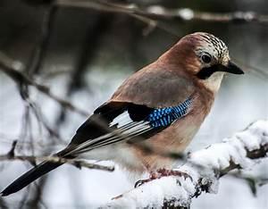 Free Images : branch, cold, winter, animal, wildlife, beak ...
