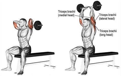 triceps overhead extension seated bar exercises using results extensions exercise workouts perform achieve technique perfect