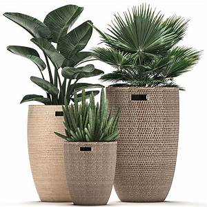 Decorative, Plants, In, Flower, Pots, For, The, Interior, 480, 3d, Model, Max, Obj