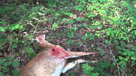 deer hunt  savage  lrh mm mag youtube