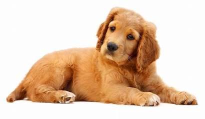 Dog Transparent Animals