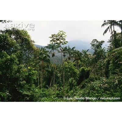 Atlantic forest photo H11Arkive