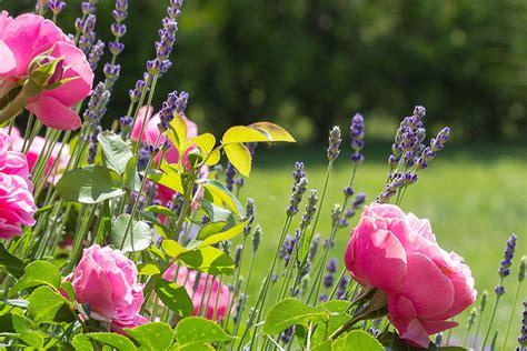 Garten Und Landschaftsbau Tripp by Ein Garten Drama Stefan Tripp Garten Und Landschaftsbau