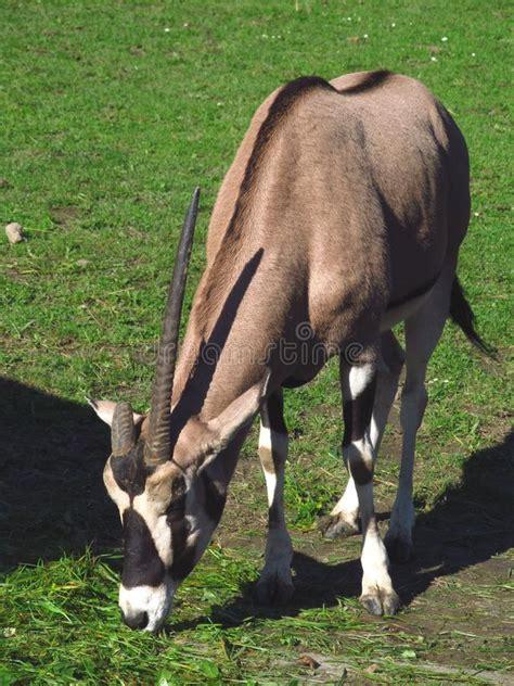 unicorno reale fotografia stock immagine 45818046 unicorno reale fotografia stock immagine di animali 45818046