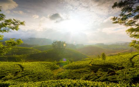 munnar hills  kerala nature landscape wallpaper