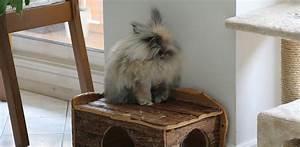 Maison Pour Lapin : maison en bois pour lapin ~ Premium-room.com Idées de Décoration