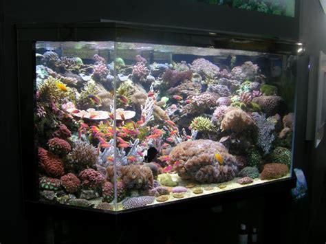 aquarium eau de mer d 233 butante