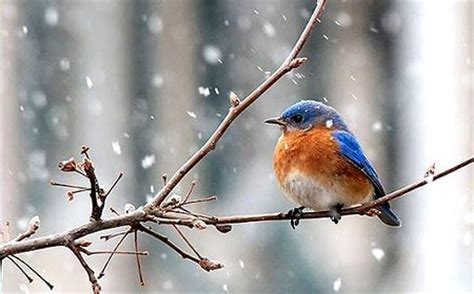 how to help wild birds during the winter www coolgarden me