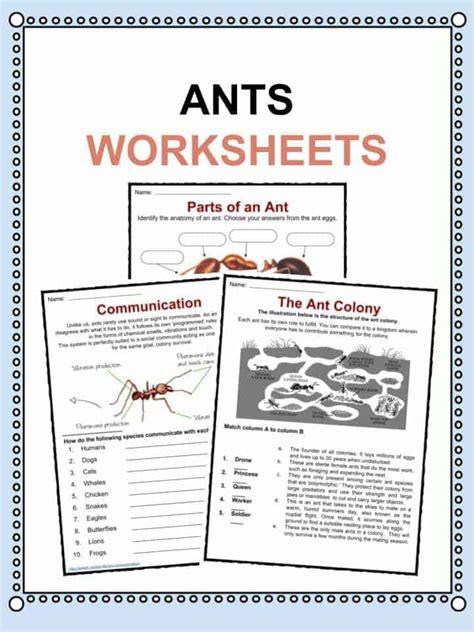 ant facts worksheets information  kids