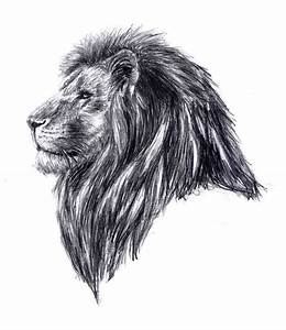 Lion Head by kiwisplash on DeviantArt