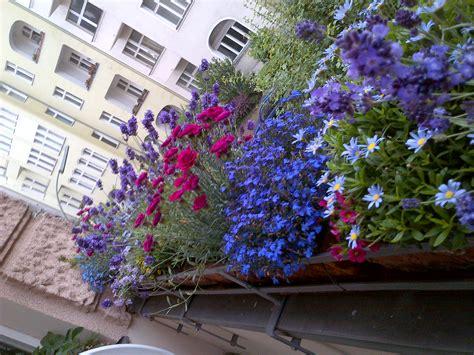 piante ricanti per terrazzo piante da terrazzo ricanti