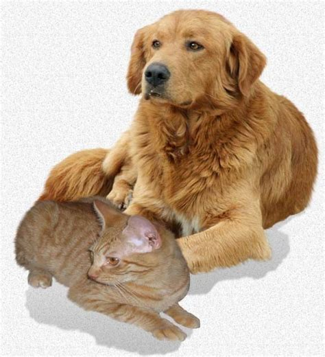 seizures in dogs epilepsy in your pet seizures in dogs and cats pet health nurtition training pinterest