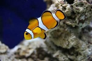 Optimale Aquarium Temperatur : fish tank temperatures during the summer petcha ~ Yasmunasinghe.com Haus und Dekorationen