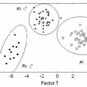 (PDF) Morphological variation and sexual dimorphism in the ...