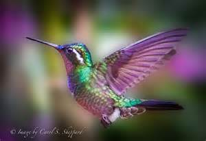 Colorful Hummingbird Bird