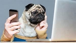 Lustige Twister Fr Erwachsene Mops Mit Handy Vor Laptop