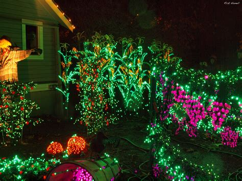 bellevue washington botanical garden christmas lights