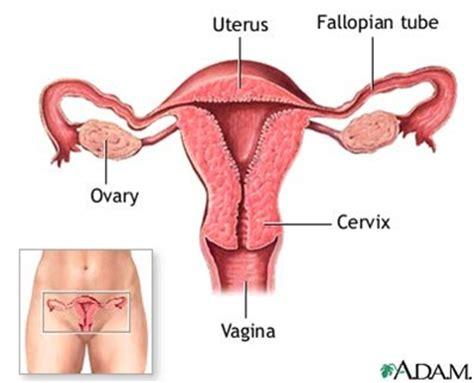Cytotec Zwangerschap Isom7thgradescience Female Reproductive System