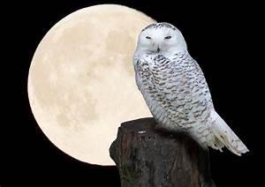 Horoskop Aszendent Berechnen : horoskop vollmond tageshoroskop dezember ~ Themetempest.com Abrechnung