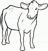 Cow Coloring Pages Printable sketch template
