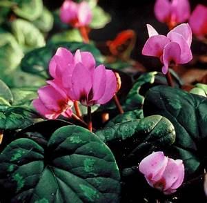 Winterharte Kübelpflanzen Schattig : panorama die richtigen pflanzen f r schattig trockene ~ Michelbontemps.com Haus und Dekorationen