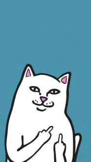 cat middle finger 1000 images about wallpaper for phone on