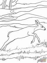 Deer Coloring Mule Pages Printable Popular Super Drawing Dot Supercoloring Coloringhome Categories sketch template
