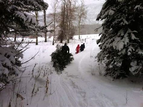 utah tree permits forest service tree cutting permits now available at u s forest service offices other vendors