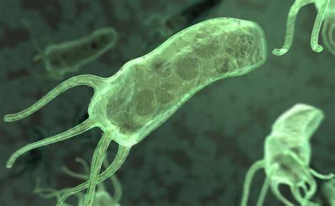 noticia erradicacion de bacteria reduce riesgo de cancer