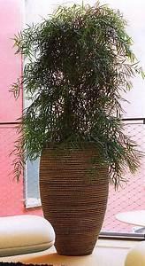 Büro Pflanzen Pflegeleicht : nutzen von b ro und zimmerpflanzen hiebinger hydrokulturen und wasserbrunnen ~ Michelbontemps.com Haus und Dekorationen
