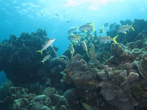 scuba diving coral beach scuba diving varadero