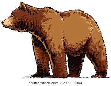 brown bear cartoon images stock  vectors