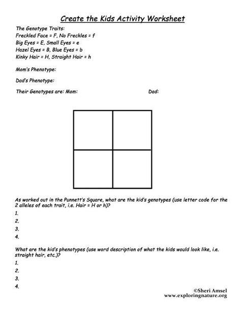 punnett square practice worksheet answers  punnett