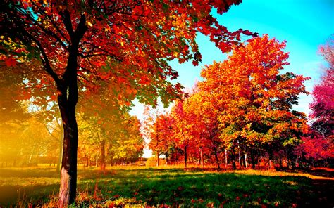 Fall Desktop Backgrounds Hd by Fall Wallpapers Hd Pixelstalk Net