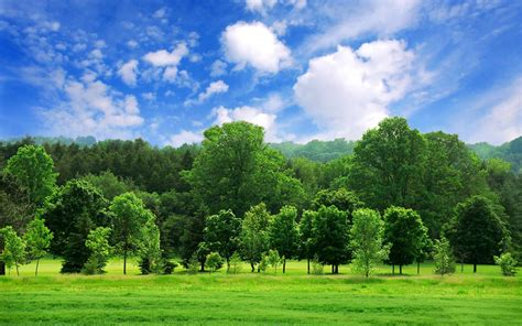 Tree Backgrounds by 70 Tree Background Images On Wallpapersafari
