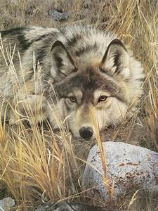 wolf print one to one detail by carl brenders