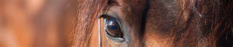 pferdelebensversicherung