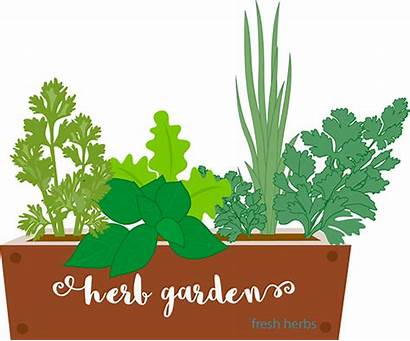 Herbs Clipart Garden Growing Gardening Container Herb