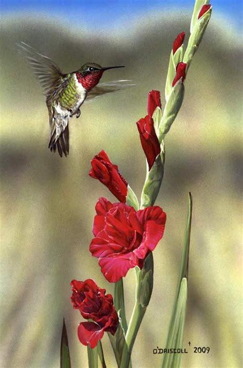 Burton Flower And Garden by Gladiola And Hummingbird Love This Tattoo Ideas