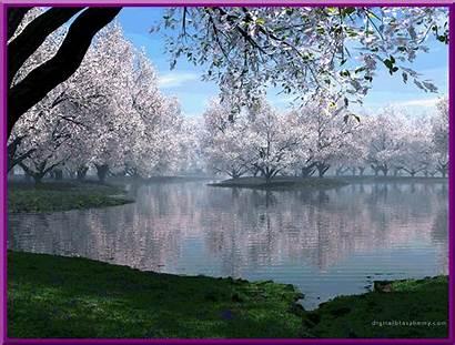 Spring Desktop Cherry Blossom Animated Tree Japan