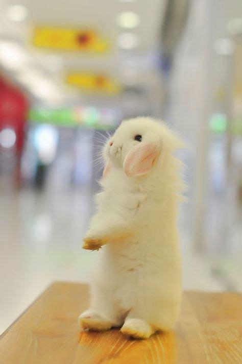 83 Fluffy Bunny! ideas | bunny, fluffy bunny, cute bunny