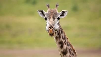 Funny Wildlife Africa Safari Biggs Andy Luxury