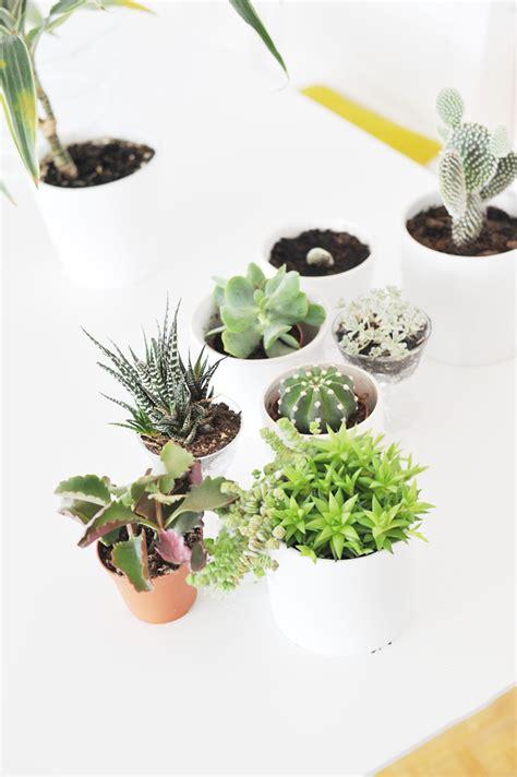 Pflanzen Für Wohnung by Eukalyptus Pflanze Kaufen Eukalyptus Pflanze Kaufen With