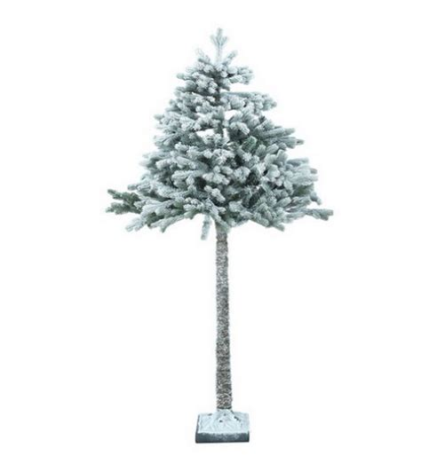 the best christmas trees for 2017 including where to buy