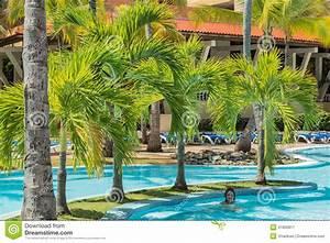 Palmier De Jardin : jardin pelucheux naturel de palmier avec la natation de ~ Nature-et-papiers.com Idées de Décoration