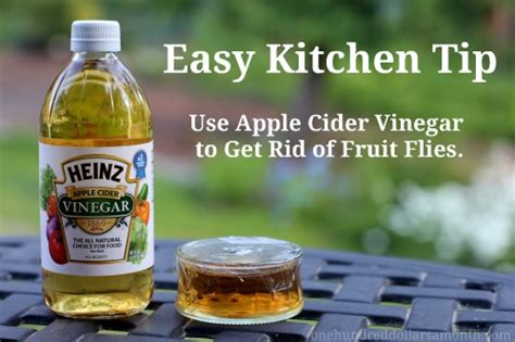 get rid of fruit flies with vinegar money saving 174
