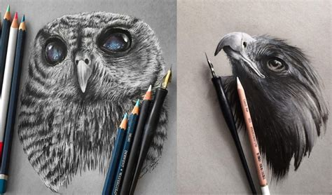 stunning animals realistic pencil drawing  jonathan