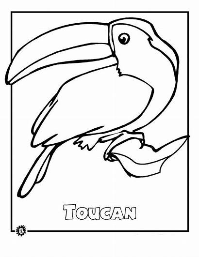 Rainforest Endangered Coloring Animals Pages Animal Species